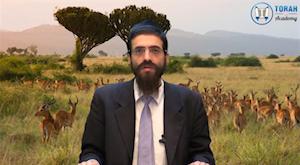 Nitsavim: la téchouva est-elle à notre portée?