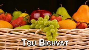 Tou Bichvat : Un lien entre ciel et terre.